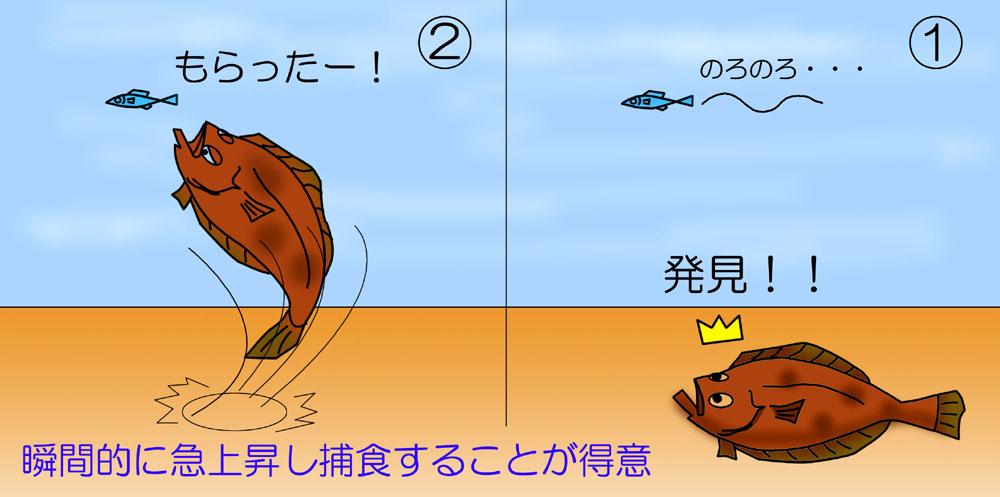 ヒラメの捕食(食い上げパターン)