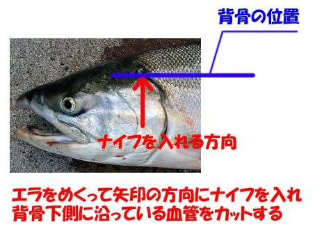 鮭の血抜き その2