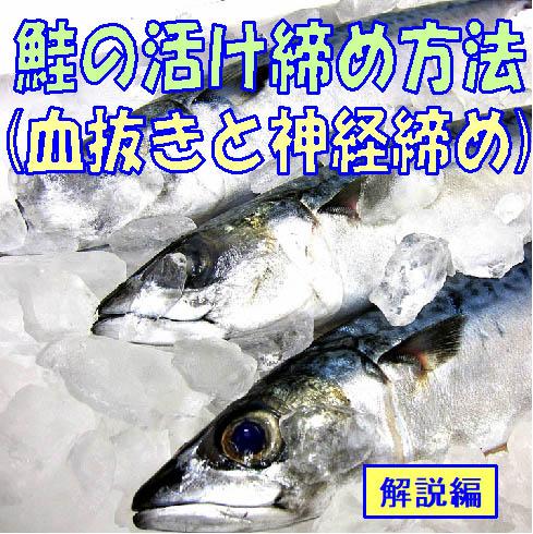 鮭の活け締め方法(血抜きと神経締め)