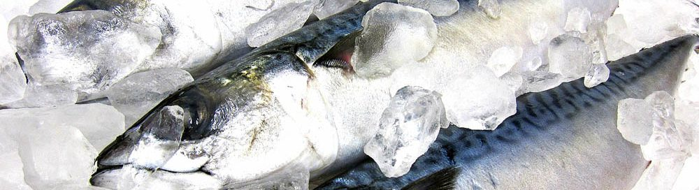 神経締めは特にサバなどの赤身魚に有効
