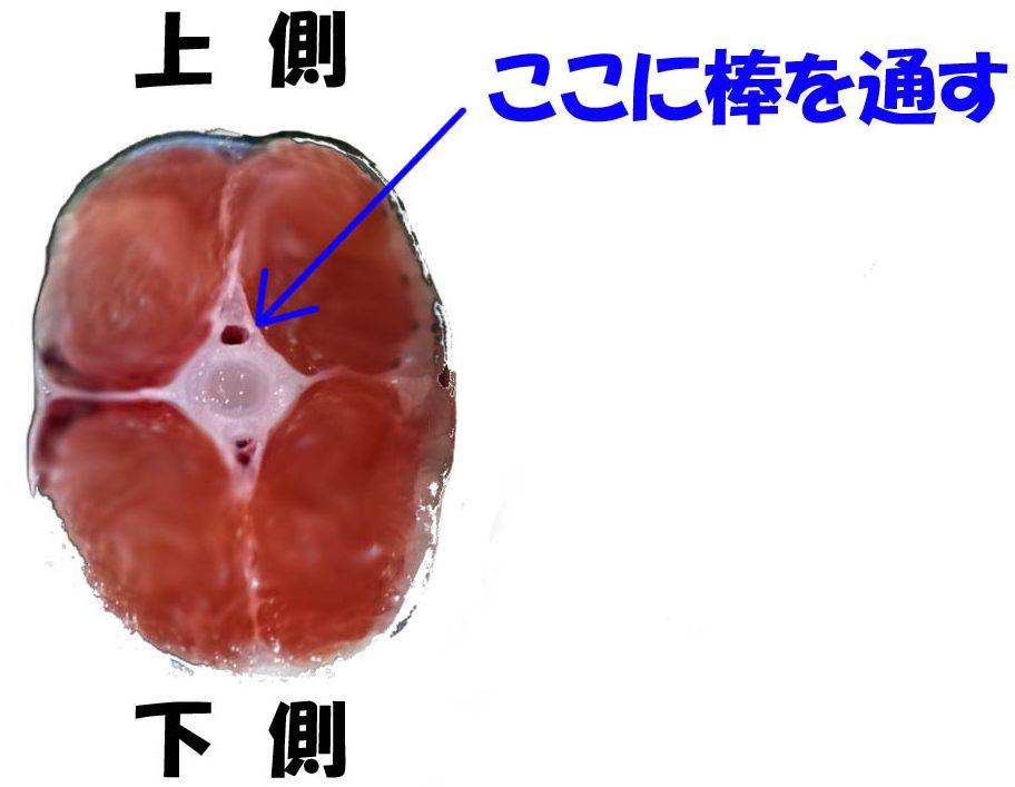 鮭の尻尾の断面写真